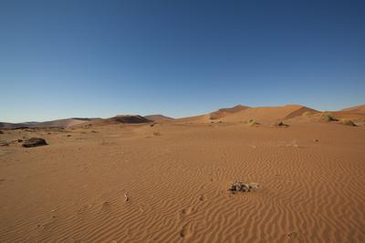 Landscape with Desert Grasses, Red Sand Dune and African Acacia Trees, Sossusvlei, Namibia, Souther