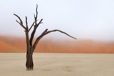 Tree Skeleton, Deadvlei, Namibia