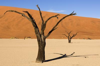 Dead Trees in Namibia