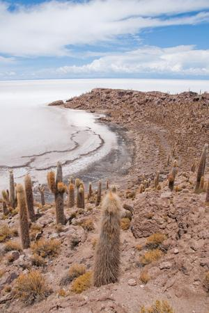 Desert Vegetation on Incahuasi Island in Salar De Uyuni, Bolivia