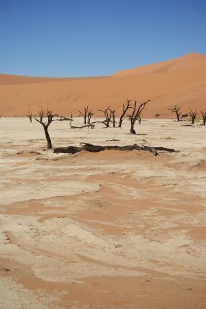Dead Vlei at Namib Desert