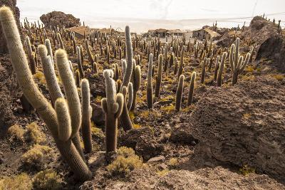 Cacti in Salar De Uyuni