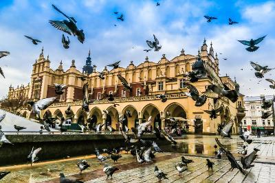 A Lot of Doves in Krakow Old City.
