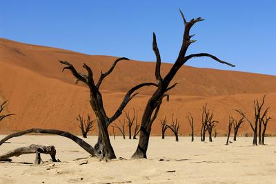 A Sand Dune in the Desert, Namibia, Africa
