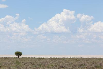 Tree in Open Field, Namibia