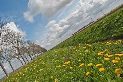 Wild Flowers in a Field in Spring