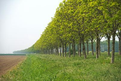 Trees and Agriculture in Spring