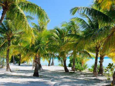 Palm Trees at Tropical Coast on Bora Bora Island