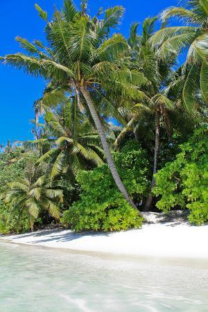 Tropical Beach and Water