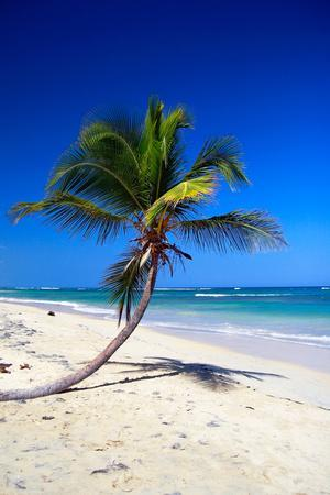 Caribbean Beach with Beautiful Palms and White Sand