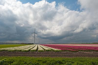 Cultivation of Flower Bulbs in Spring under a Cloudy Sky