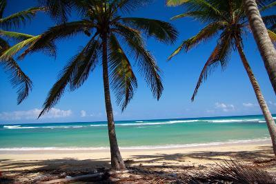 Tropical Beach with Beautiful Palms and White Sand