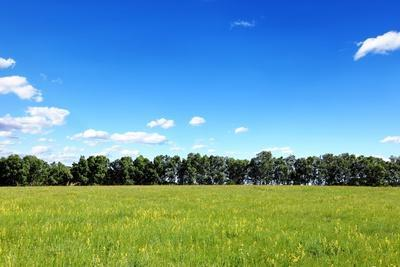 Green Field and Trees at Sunny Day
