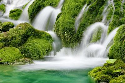 Natural Spring Waterfall Surrounded by Moss and Lush Foliage.