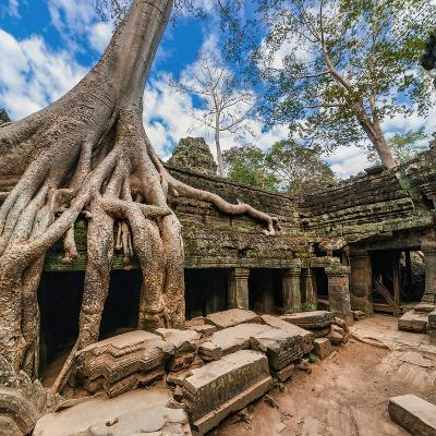 Ancient Khmer Architecture. Ta Prohm Temple with Giant Banyan Tree at Angkor Wat Complex, Siem Reap
