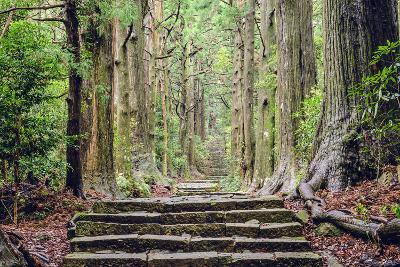 Kumano Kodo at Daimon-Zaka, a Sacred Trail Designated as a UNESCO World Heritage Site in Nachi, Wak
