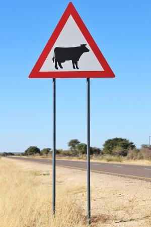 Cow Warning Sign - Funny Background Image from Africa