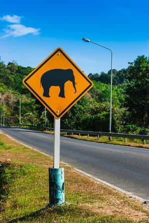 Road Sign Caution Elephants on the Track