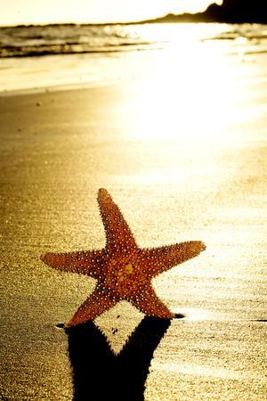 Seastar on the Shore of a Beach at Sunset