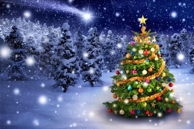 Christmas Tree in Snowy Night