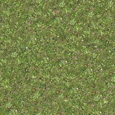 Seamless Tileable Texture of Forest Lawn.