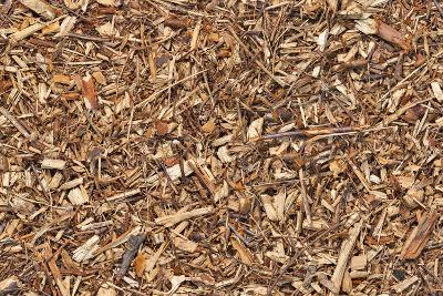 Mulch Bark Seamless Texture
