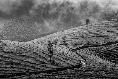 Kerala India Travel Background - Green Tea Plantations in Munnar, Kerala, India - Tourist Attractio