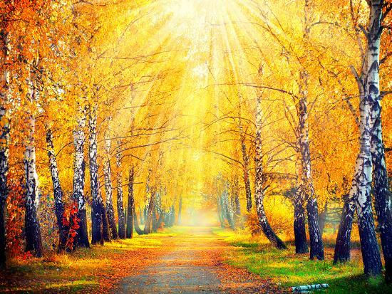 Autumn Fall Autumnal Park Trees And Leaves In Sun Rays Beautiful Scene