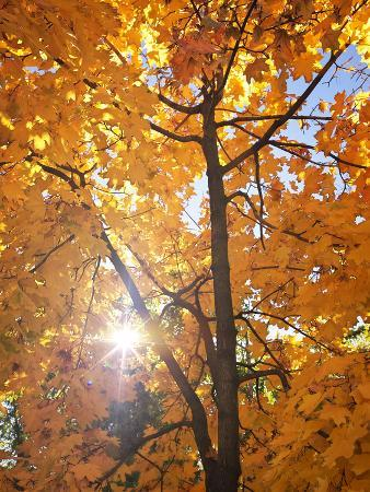 Abstract Foliage Background, Beautiful Tree Branch in Autumnal Forest, Bright Warm Sun Light, Orang