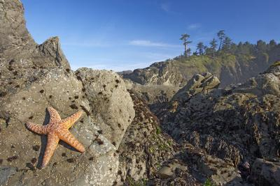 Offsore Sea Stacks and Tidepools with Ochre Sea