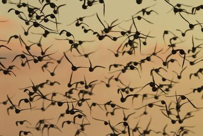 A Flock in Flight in the Early Morning