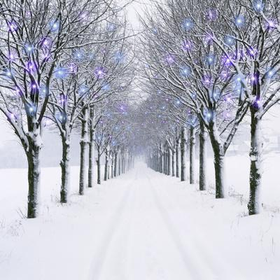 Small-Leaved Lime Trees in Winter Snow Photographic