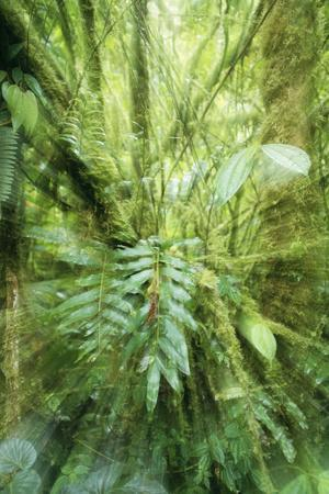 Rainforest Orosi Valley, Purisil Private Reserve
