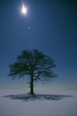 Oak Tree with Moon, Night Landscape in Snow