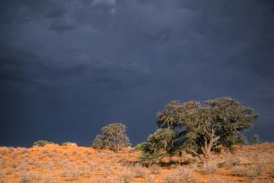 South Africa Thunderstorm, Red Dunes and Camelthorn