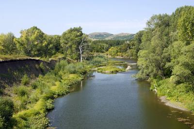 Deciduous Forest in River Sakmara Valley