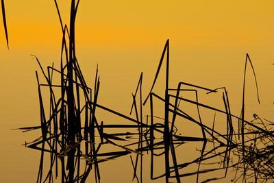Patterns of Reeds in Lake at Sunset