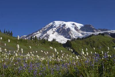 Mount Rainier and Alpine Meadows