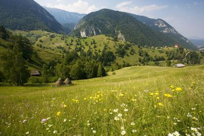 Flowery Pastures in the Piatra Craiulu Mountains