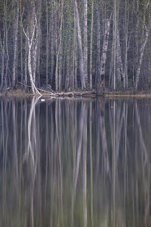 Reflections in a Small Lake in Taiga Forest