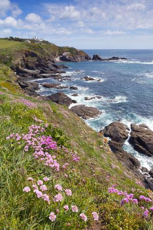 Lizard Point with Thrift in Foreground