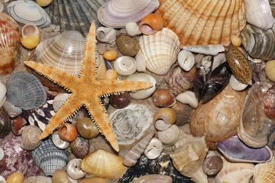 Atlantic Mixed Shells and Starfish on Beach