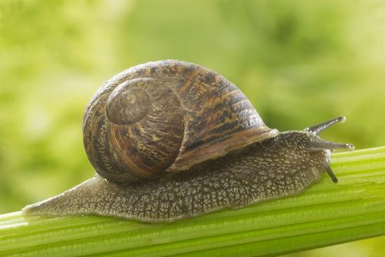 Resultado de imagen para snail in celery