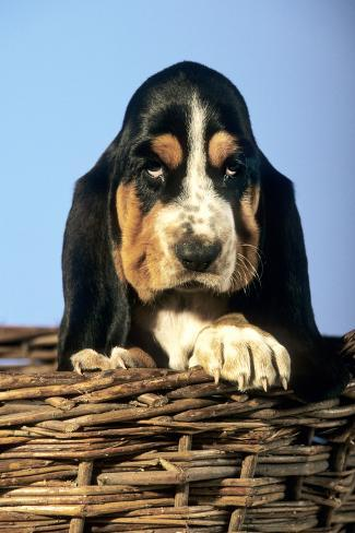 MOTIVATIONAL 24X36 DOG 2 PUPPIES IN A BASKET POSTER