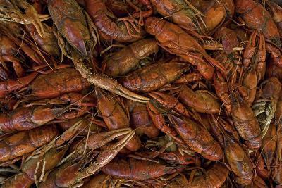 Louisiana Crayfish