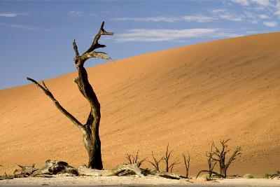 Dead Trees in Dead Vlei, Dead Trees with Red Dunes