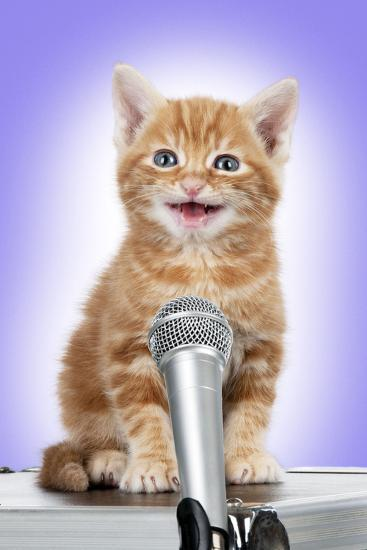 Karaoke Cat Ginger Tabby Kitten Singing into Microphone' Photographic Print  | AllPosters.com