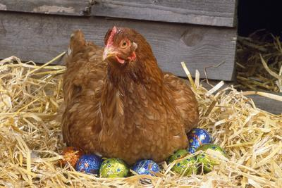 Chicken on Easter Eggs