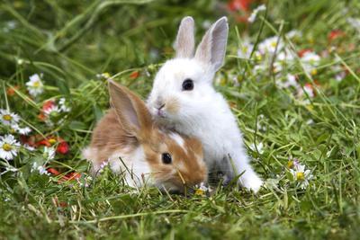 Domestic Rabbits Outside Amongst Flowers