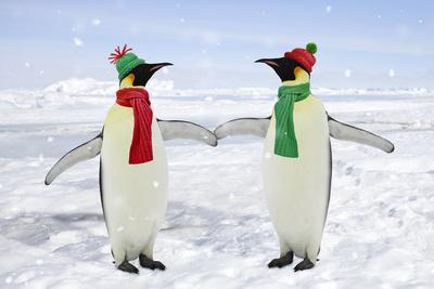 Emperor Penguin Pair Holding Hands Wearing Christmas